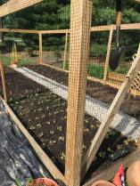 An installed garden growing vegetables for sale.